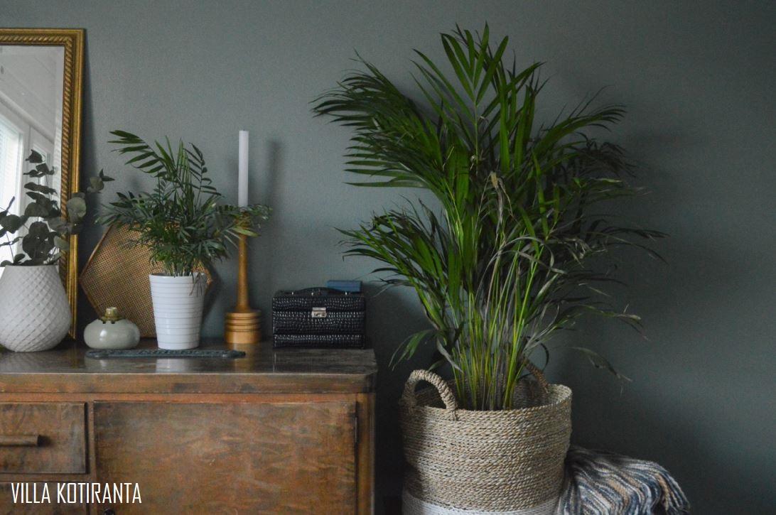 Onnentunteita uudella huonekasvilla
