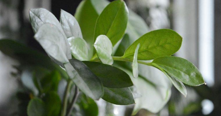 Huonekasvien lisääminen on varma kevään merkki Villa Kotirannassa