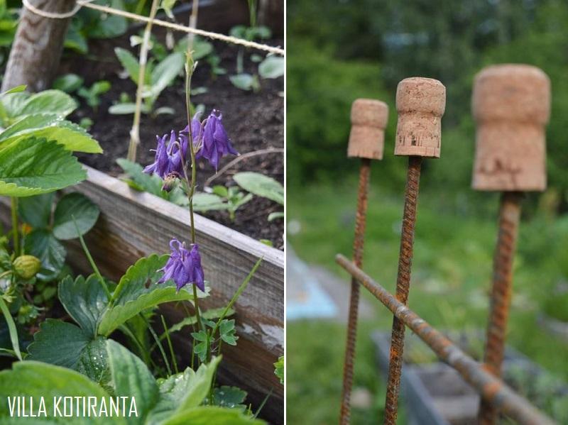 Eteneminen puutarhassa ja suosikkireseptini puutarhan antimista