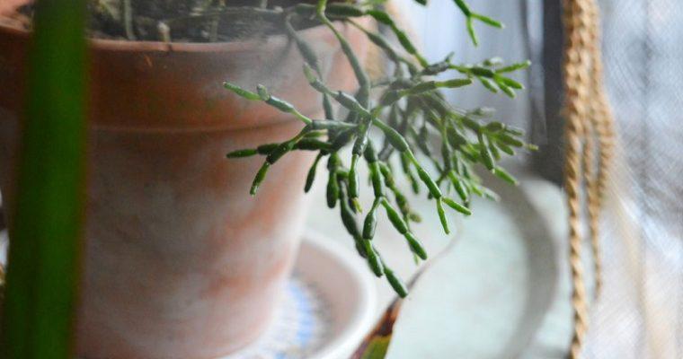 Lokakuun kauneimmalla kirppislöydöllä kaivattua lisätilaa huonekasveille