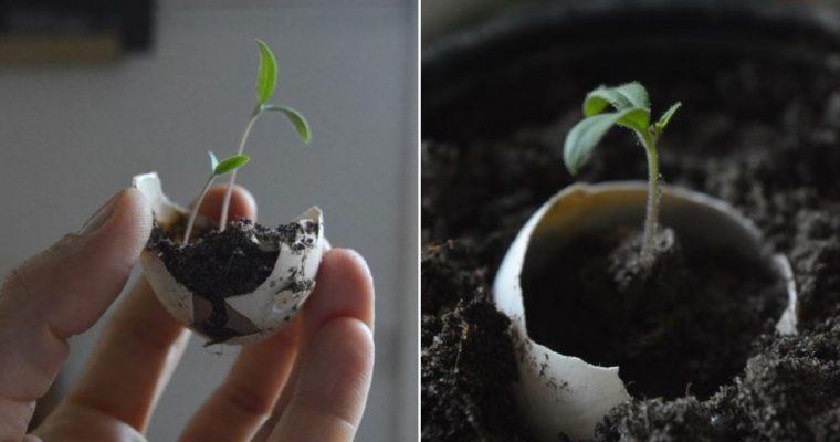 Ajatuksia omavaraistelusta kasvuvyöhykkeellä 3 – Mäntsälä