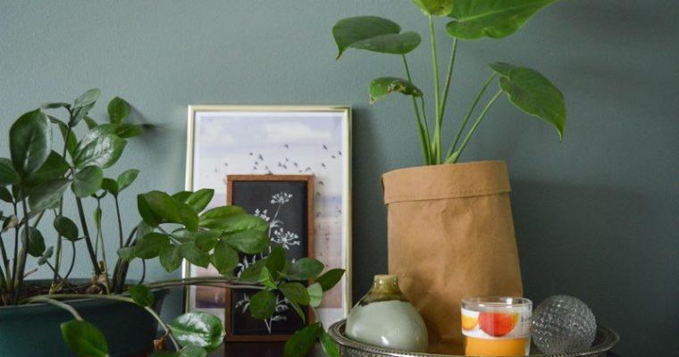 Uudet suojaruukut makuuhuoneen viherkasveille