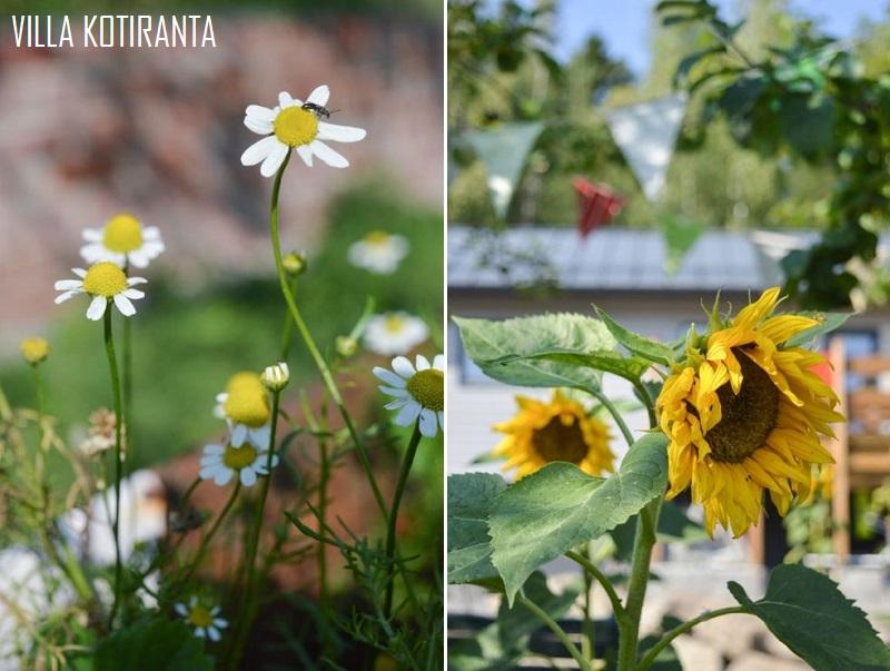 Kuulumisia puutarhasta ja kierrätysideoita kasvimaalta kasvihuoneeseen