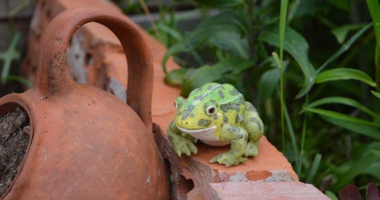 Hyönteishotelli ja vesipiste puutarhaan kierrätysmateriaalein